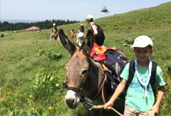 Randonnées avec âne